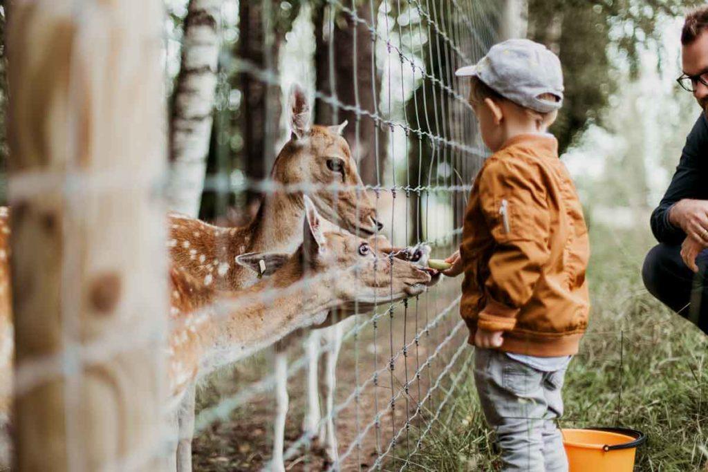 Wochenendtrip mit Kind - 5 Destinationen für die ganze Familie