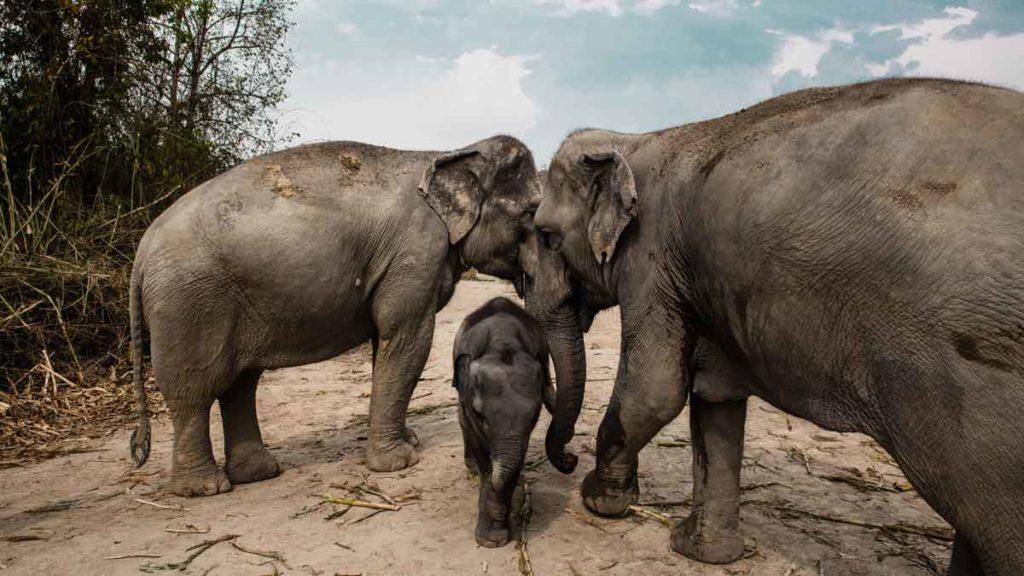 SehenBeliebtes Reiseziel 2020: Chiang Mai und das Elefantenschutzgebiet