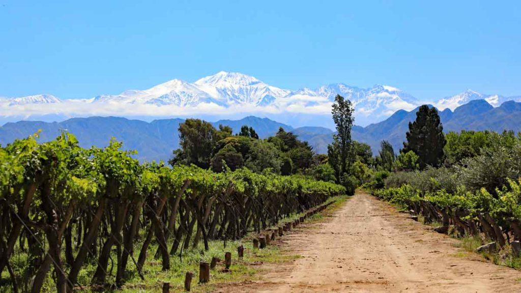 Blick auf die argentinischen Weinberge vor den Anden