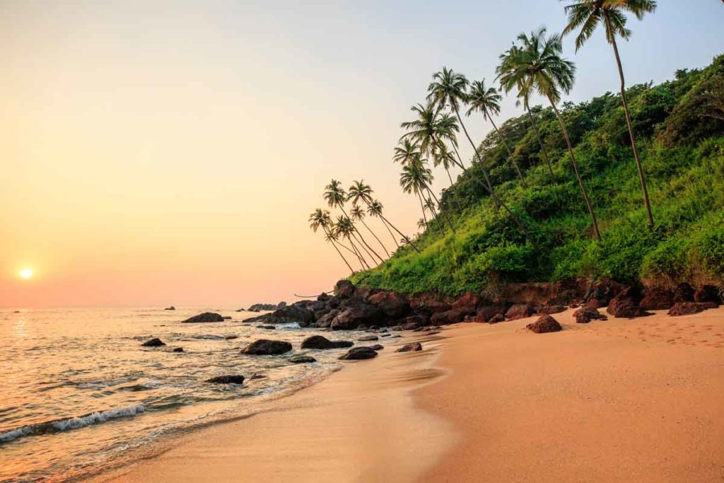 A beach in Goa during sunset with palms