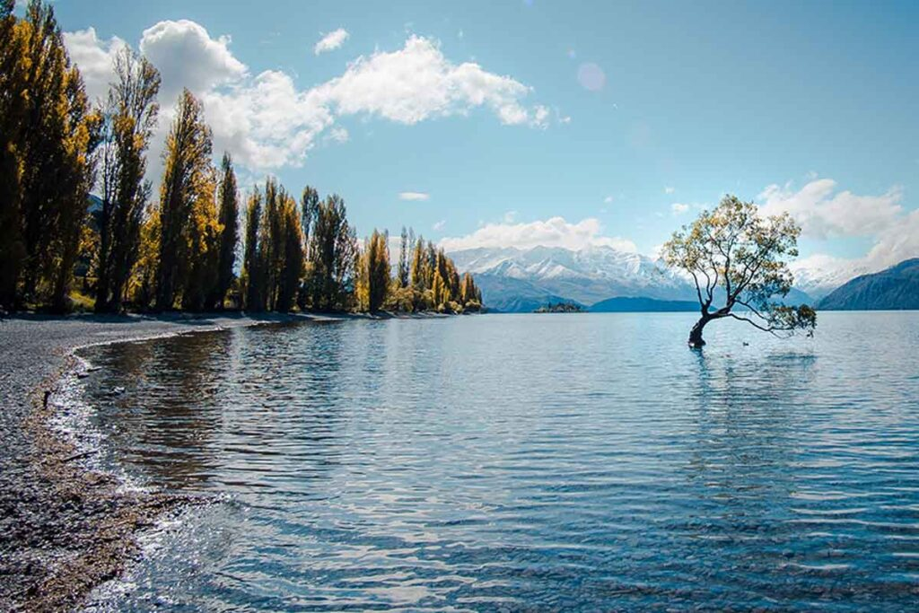 EIn Baum befindet sich in der Mitte eines kristallklaren Sees.