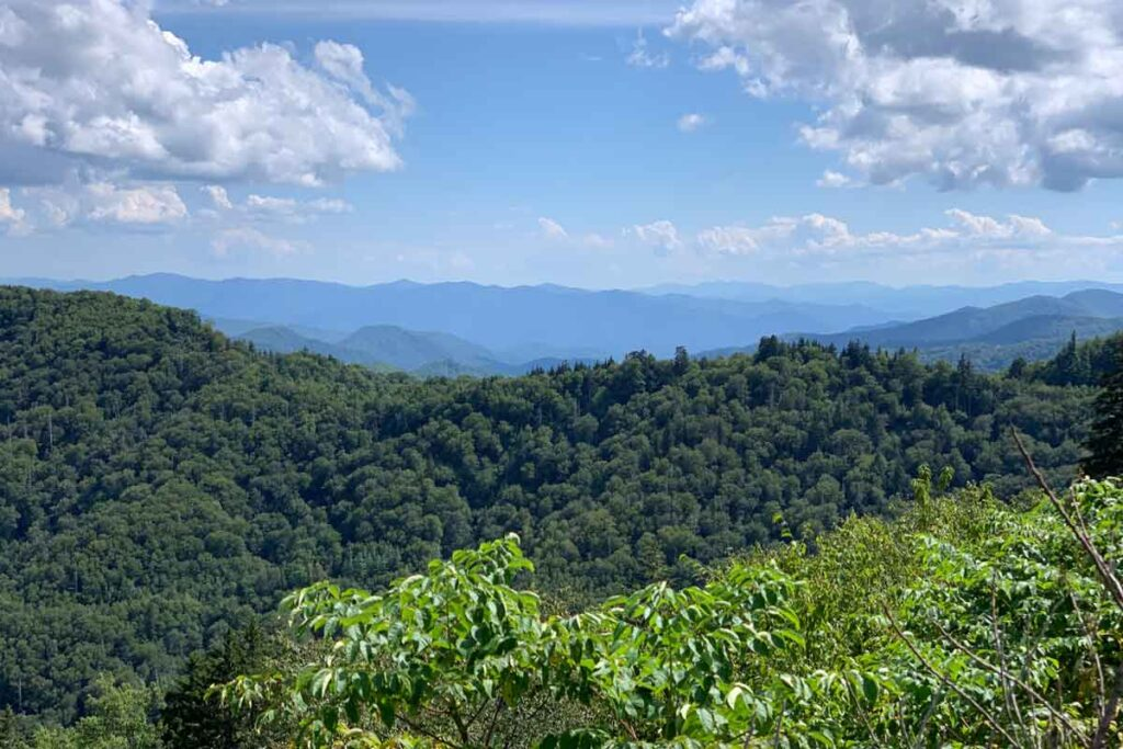 A dense green woodland under blue skies on the Appalachian Trail