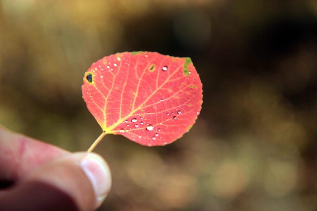 Ein rotes Blatt präsentiert als kreative fotoidee für Zuhause
