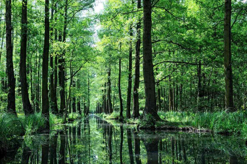 Ein grünes Waldgebiet mit Wasser