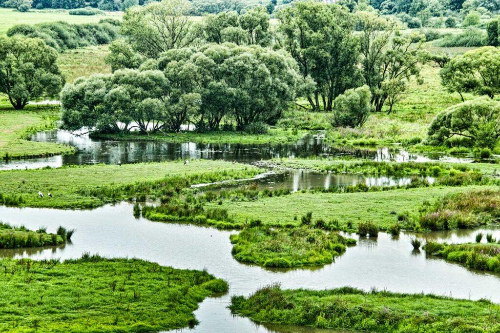 Grüne mit wasserdurchtränkten Wiesen in Bliesgau sorgt für den perfekte Natururlaub in Deutschland