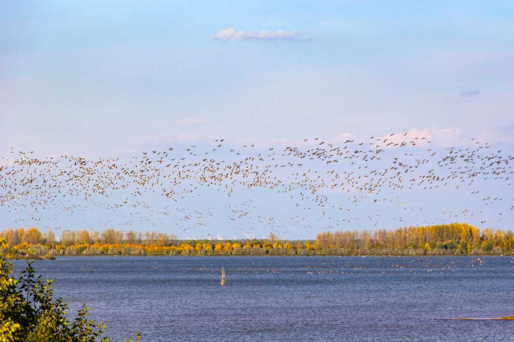 Vogel fliegen über ein See in Wanninchen