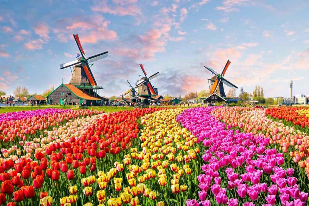 Die berühmte Bloemen Route in die Niederlände ist einfach die perfekte Roadtrip in Europa